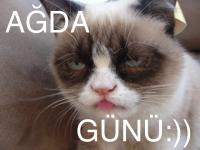 grumpy_cat_photo