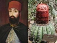 cactus turk