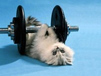 20120808-weight-lifting-cat