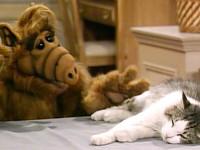 alf ve kedi