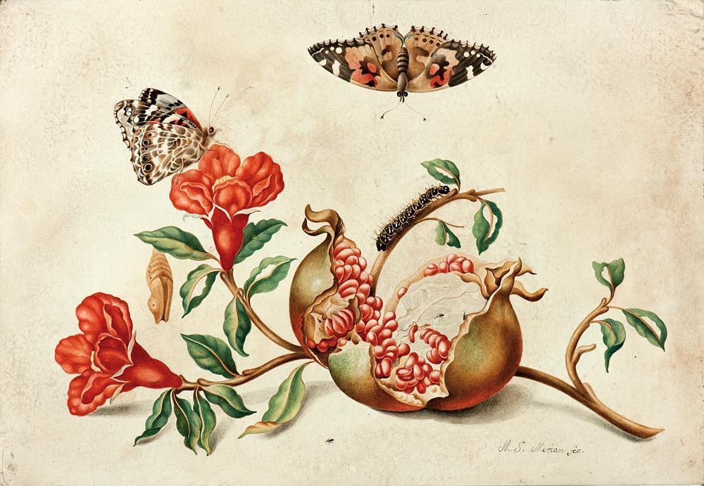 YMaria Sibylla Merian'ın Mücadeleci Doğası