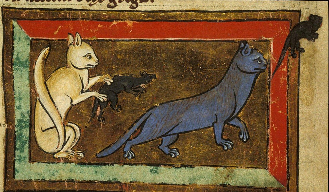 YMuzır Minnoş Ortaçağ Kedileri