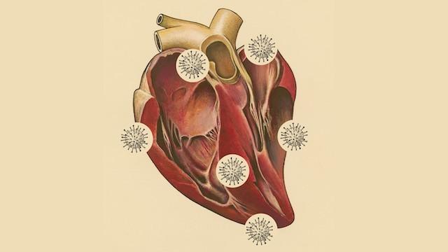 YCOVID-19 Kalp Tartışmasının Temel Dersi